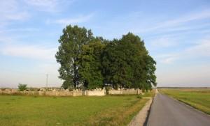 Widok na cmentarz przed wycinką drzew... [2005 r.]. Foto W. Cichecki.