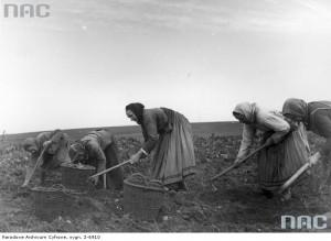 Ręczne wykopki [1939 r.]. Narodowe Archiwum Cyfrowe.