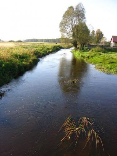 Rzeka Nida płynąca przez Podłazie [2010 r.]. Foto W. Cichecki.