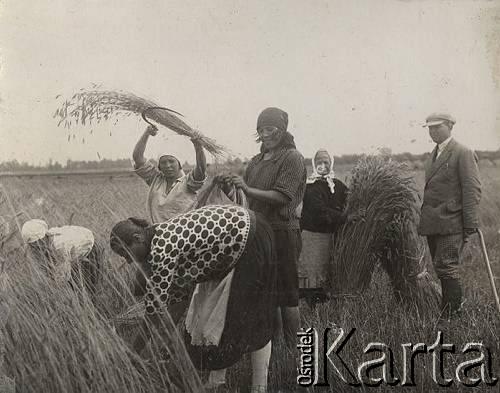 Kobiety podczas rżnięcia zboża sierpami [lata 30 XX w.]. Ze zbiorów Ośrodka KARTA.