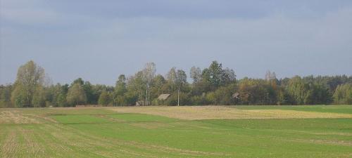 Przypuszczalne miejsce lokalizacji dawnego Szczodrowa widziane obecnie [2012 r.] od strony południowej (droga Rogienice - Bebelno). Foto W. Cichecki.
